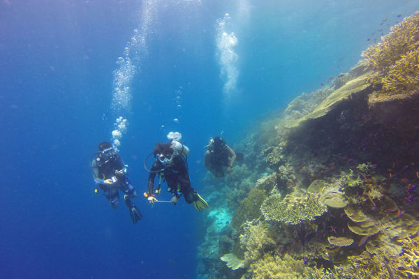 Activités plongée sous-marine Porto-Vecchio