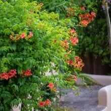 residence-4-etoiles-palombaggia-porto-vecchio (14)